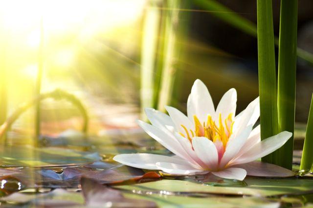 Self Healing Self Healing